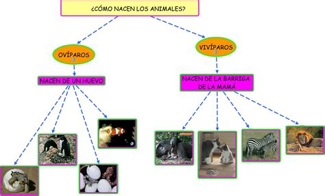 imagenes animales oviparos y viviparos animales ov 205 paros y viv 205 paros