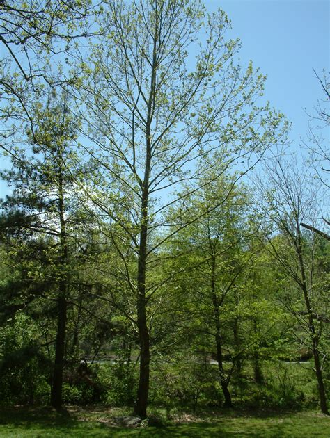 trees nc asheville moon tree