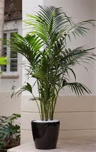best 25 artificial plants ideas on pinterest