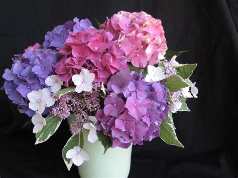 Hydrangea In Vase by In A Vase On Monday Hydrangea Gift Pbmgarden