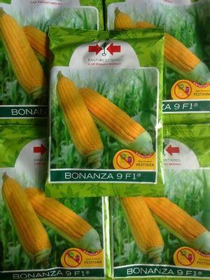 Bibit Jagung Dk 77 jual benih jagung sms wa 0857 7228 0300 dadimakmur
