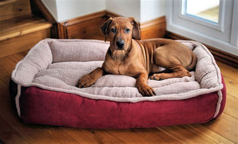 dog sleeping on bed dog bed what to consider to choose the best one for your