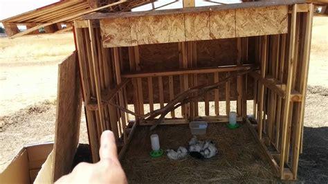 diy pallet chicken coop   range chickens youtube