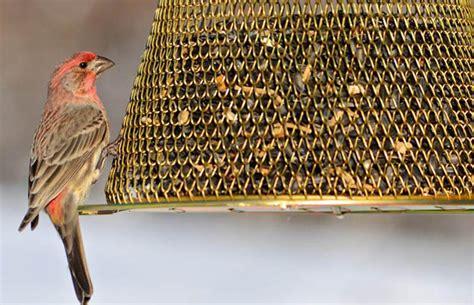 no no original brass bird feeder b00302 the home depot