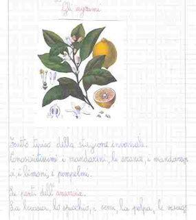 testo descrittivo sull inverno unit 224 didattica sull inverno gli agrumi