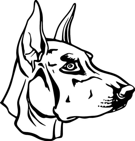 free coloring pages of how to draw a doberman