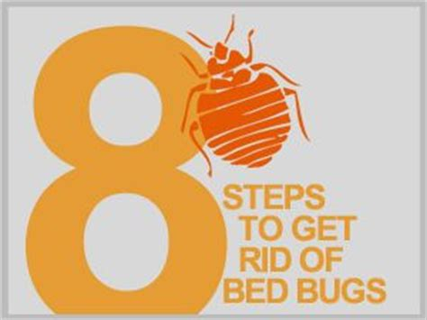 hot to get rid of bed bugs bed bugs beds and products on pinterest