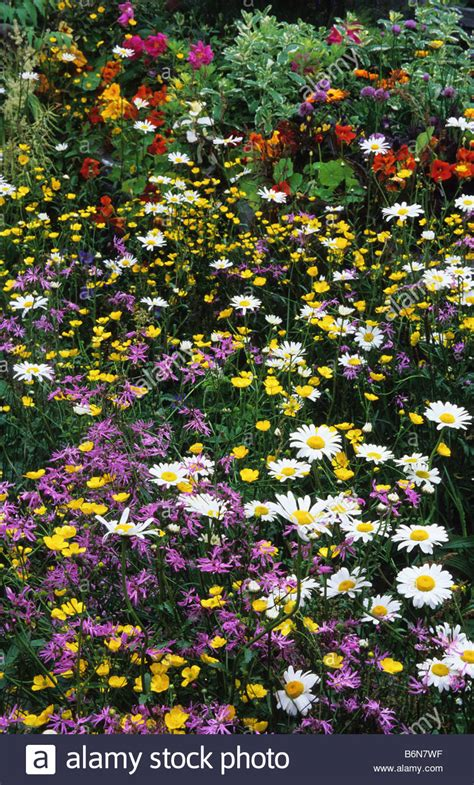 cottage garden plants flowers and cottage garden flowery mead plants summer