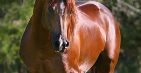 pin by marah ingalsbe on my home pinterest al marah matt dillon beautiful horses pinterest matt