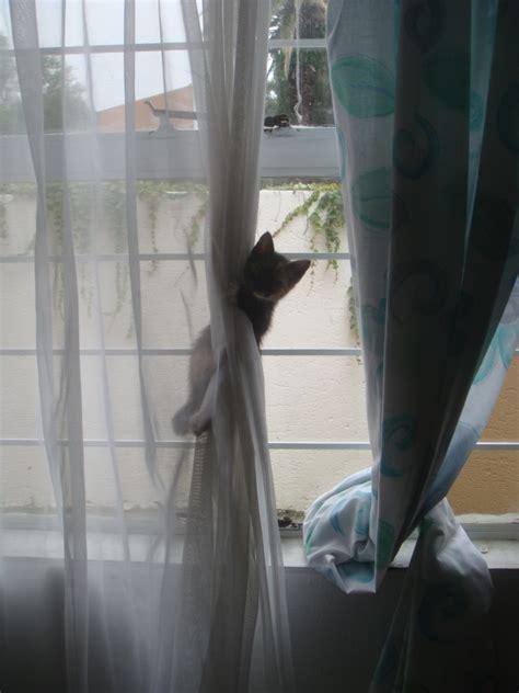 cat curtains kittens vs cats adopting a senior imagine home