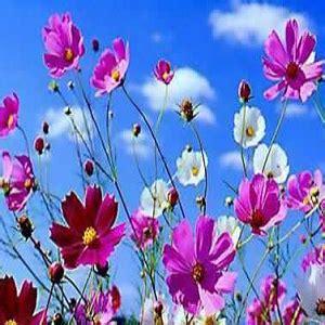 come fare un mazzo di fiori come preparare un mazzo di fiori perfetto la guida