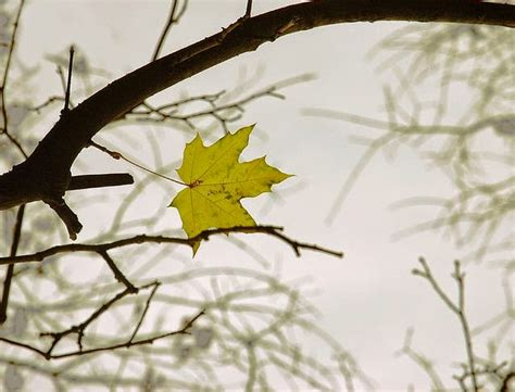 short story analysis the last leaf by o henry the last leaf o henry character analysis theleaf co