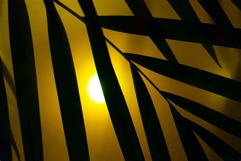wallpaper garis kuning le n 233 on couleur fashion designs