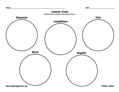 Animals In Nanopics Worksheet Pets Match Pictures