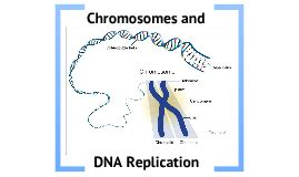 section 2 replication of dna biology chapter 12 section 2 chromosomes and dna