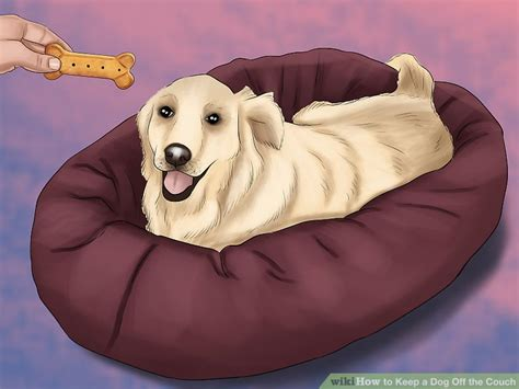 keep dogs off sofa methods to maintain a canine off the sofa find trending