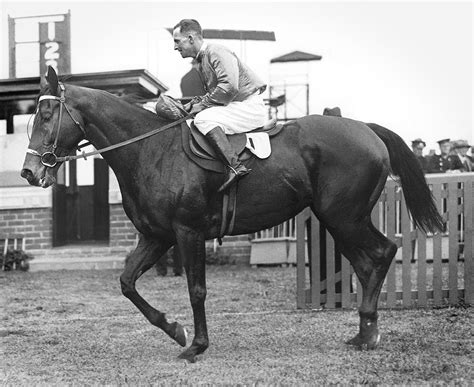 tom hughes racing linlithgow stakes wikipedia