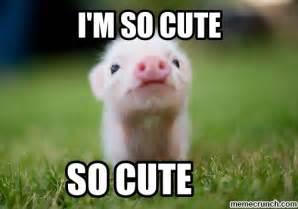 Meme Cute - baby pig meme memes