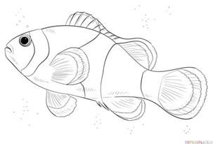 How To Draw Fish How To Draw A Clown Fish Step By Step Drawing Tutorials