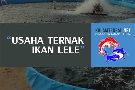 Pakan Ternak Ikan Lele Alami sukses usaha ternak ikan lele di kolam terpal