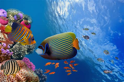 Gulf Coast Cottages by A Q Amp A On Florida S Endangered Coral Reefs What To Know