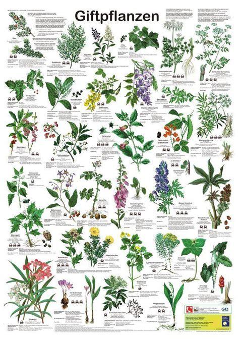 Pflanzen Und Gartenbedarf 790 by Giftpflanzen Garten Kr 228 Uter Pflanzen Und