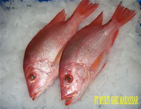 alibaba wiki indo lebensmittel alimentos speisefisch peixe youtube