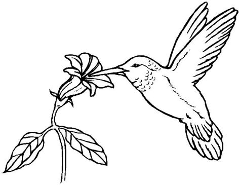 coloring page hummingbird coloring pages hummingbirds 171 free coloring pages