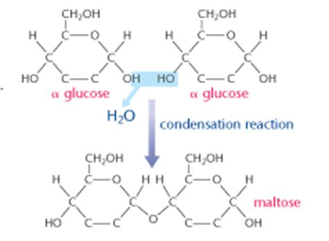draw diagrams to illustrate condensation and hydrolysis reactions disaccharides
