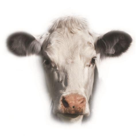scow head nfu backs great british beef week foodservice footprint
