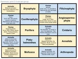 classification ib biology