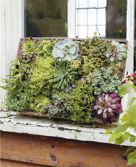 tiny garden teeny tiny gardening interview design sponge