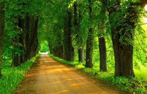 wallpaper road forest trees nature park spring