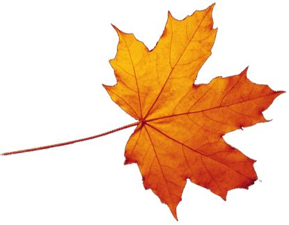 autumn leaves png images transparent free download