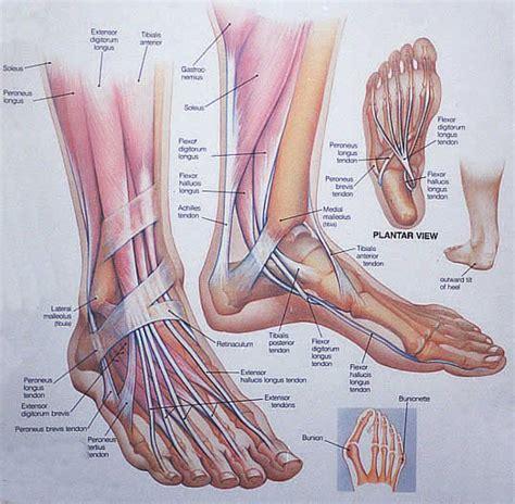 foot diagnosis diagram human anatomy diagram plantar human foot anatomy view