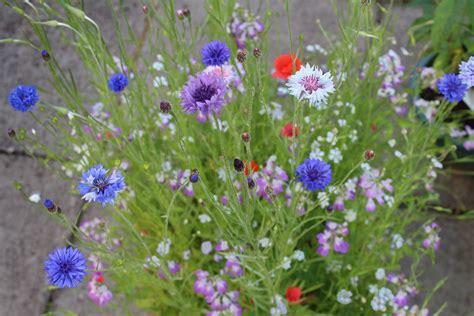 flowers uk 1 x box of flower seeds 1 tub garden soil add