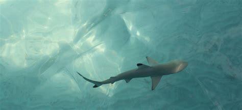 baby shark uk secrets of the maldives 171 holidays please