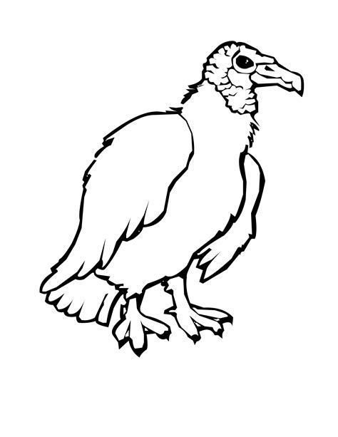 turkey vulture coloring page bird coloring pages
