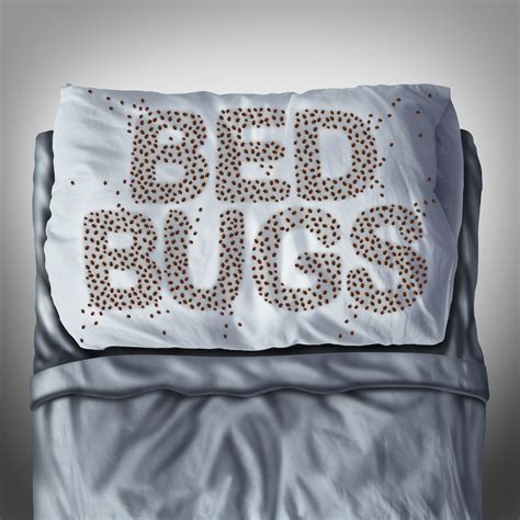 bed bug cleaning services bed bugs gc cleaning services new york city manhattan