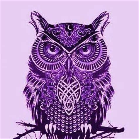 Owl Purple purple owl images search