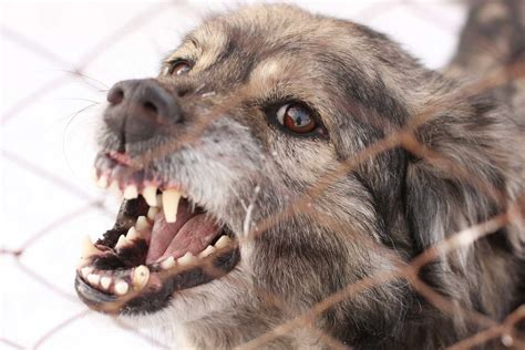 vicious barking emotional effects of a bite answers petro cohen