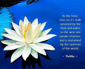 Significance Of Lotus In Buddhism Light Within Part I Buddhists The Mud And Flower