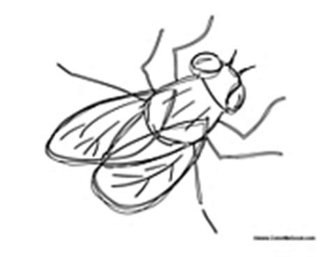 Fly Coloring Pages Fly Coloring Page
