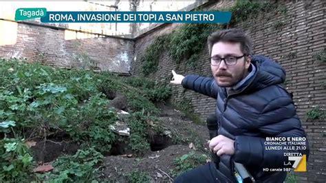 Topi Musically roma invasione dei topi a san pietro