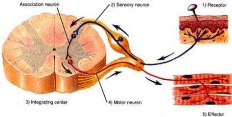 Laser Therapy Trigger Points Detox by Učinkovito Pri Mišičnih Spazmih Vita Fit Center