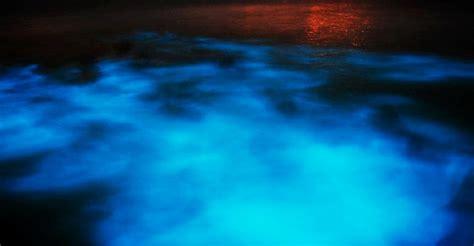 Visit Jamaica   Luminous Lagoon