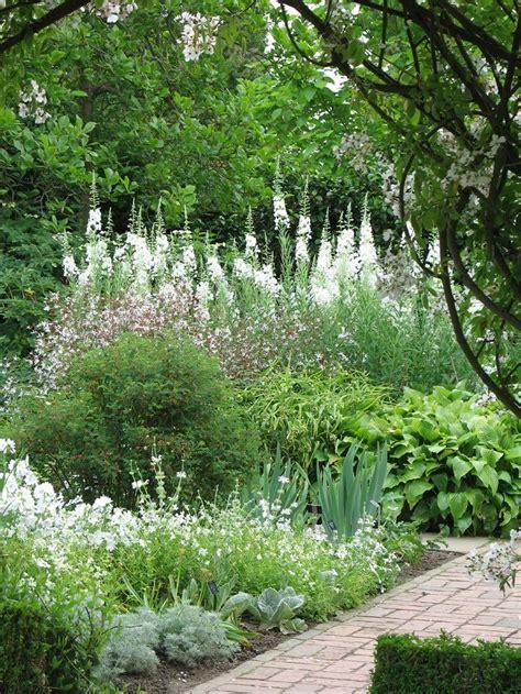 witte thee tuinen mooie tuin met witte bloemen groen