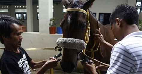 Trik No 1 Ipa Terpadu kuda termahal di indonesia milik sang bupati sula guru