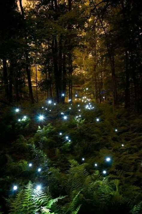 time and the garden encountering the magical in the and works of j b priestley books 170 best images about fireflies on wakayama