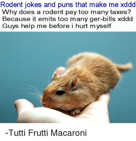 Rodent Meme - rodent jokes and puns that make me xddd why does a rodent